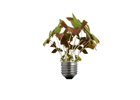 reprocessing: Bulb with the plant.