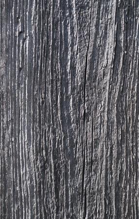 dead wood: Tree texture Stock Photo