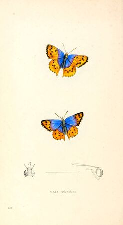 Illustration of animal. Old image painted by hand.