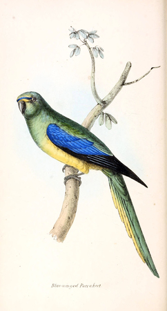 Illustration of animal. Old image painted by hand. Foto de archivo - 98558215