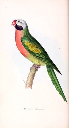 Illustration of animal. Old image painted by hand. Foto de archivo - 98558217