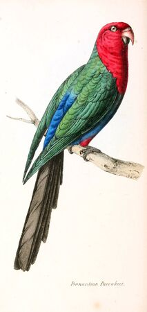 Illustration of animal. Old image painted by hand. Foto de archivo - 98558144