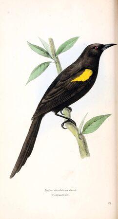 Illustration des Tieres . Altes Bild gemalt von Hand Standard-Bild - 98558183