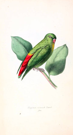 Illustration of animal. Old image painted by hand. Foto de archivo - 98558115