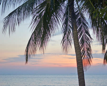 palm tree against beauty seascape Stock Photo - 17987352