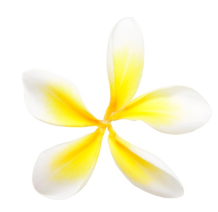 petals of plumeria isolated on white photo