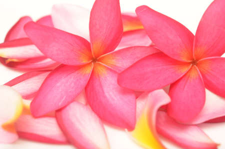 tropical flowers and petals on white photo