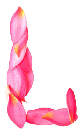 letter J made from beauty flower petals on white Stock Photo - 18014949