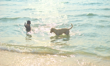 two dogs in the sea photo