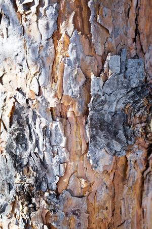 Teakbaum rinde  Oberfläche Auf Rinde Von Teakbaum Lizenzfreie Fotos, Bilder Und ...