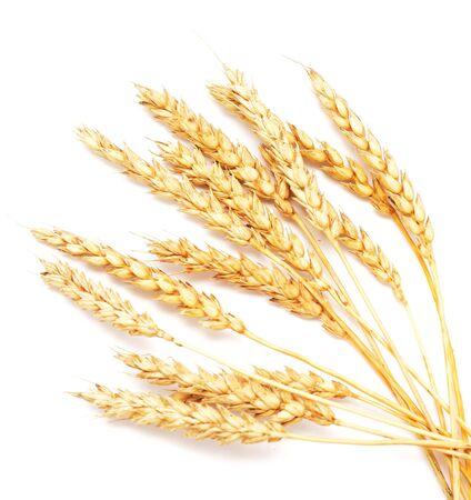 golden wheat isolated on white background 免版税图像