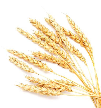 golden wheat isolated on white background Archivio Fotografico