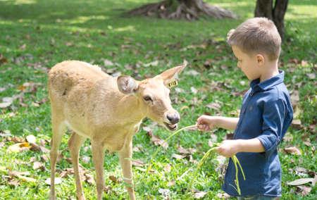 Baby with deer in the contact Zoo Foto de archivo - 124172895