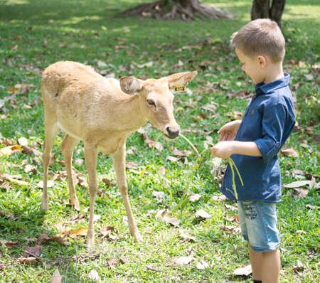 Baby feeding deer in the contact Zoo Foto de archivo - 124172892