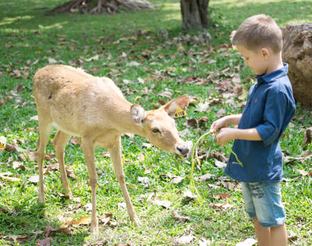 Baby feeding deer in the contact Zoo Foto de archivo - 124172896