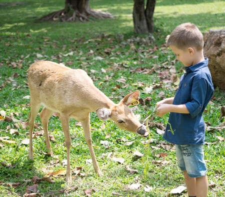 Baby feeding deer in the Zoo Foto de archivo - 124172894