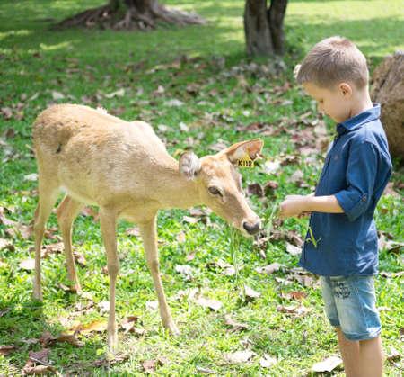 Baby feeding deer in the Zoo Foto de archivo - 124172893