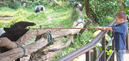 Baby feeding tapir in the Zoo Foto de archivo - 124172897