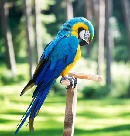 Macaw parrot against forest