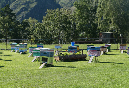 Wooden hives on a mountain apiary Banco de Imagens