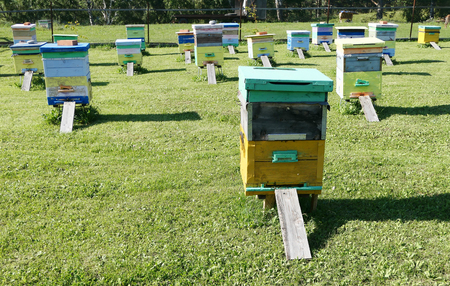Wooden hives on green grass
