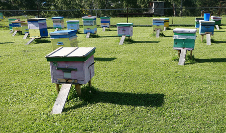 Group of hives on green grass Banco de Imagens