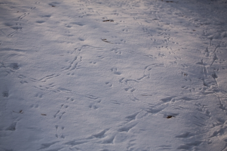 birds footsteps on snow Stock Photo - 19859988