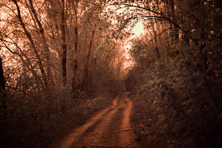 infrared photo of road lined with oak trees photo