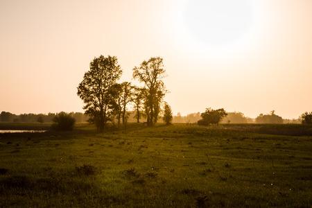 field on sunset photo