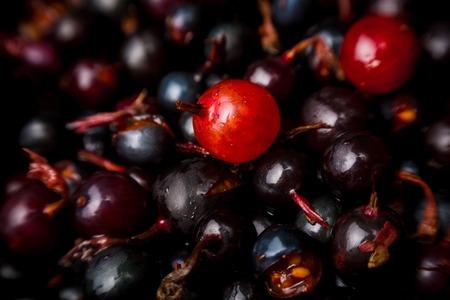 blackberry bush: blackcurrant background