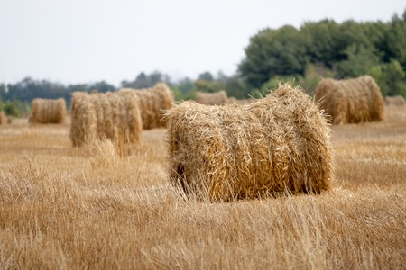 Hay bale or sheaf photo
