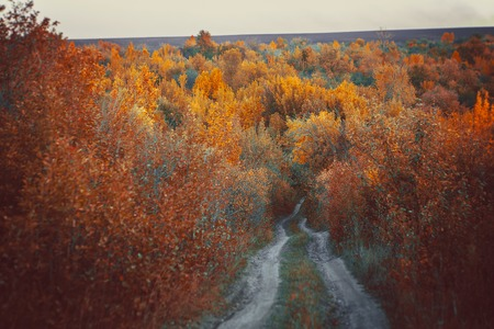 veluwe: Beautiful autumn forest in  national park