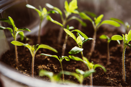 seeding: Agriculture, Seeding, Plant seed  growing concept  selective focus