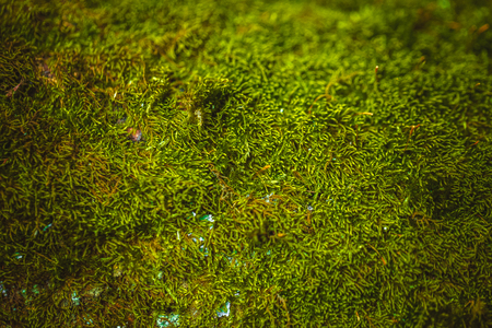 fresh green moss growing close up background Stock Photo