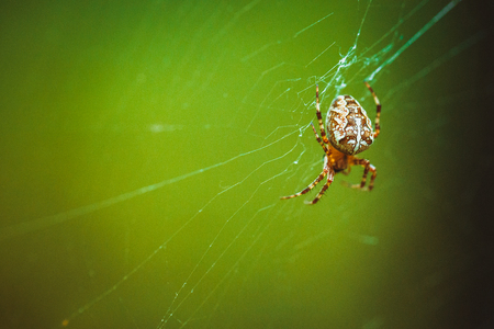 ploy: spider hanging on the web in a forest Stock Photo