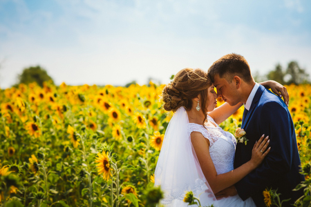 bride and groom against the background of a field of sunflowers