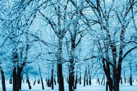 bosque de invierno y ramas en la nieve durante el día. Foto de archivo