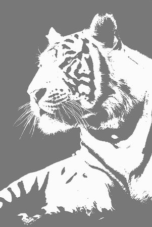 merriment: Illustration of white tiger sitting on a side