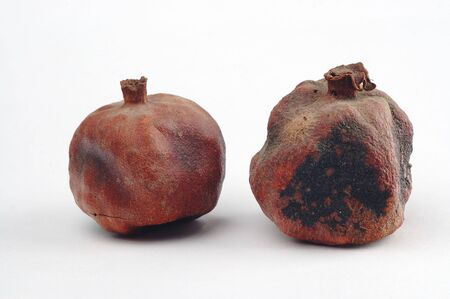 mustiness: Dried and rotten pomegranates on the white paper
