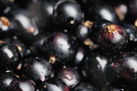 black currants: Black currants. Narrow depth of field. Close-up.