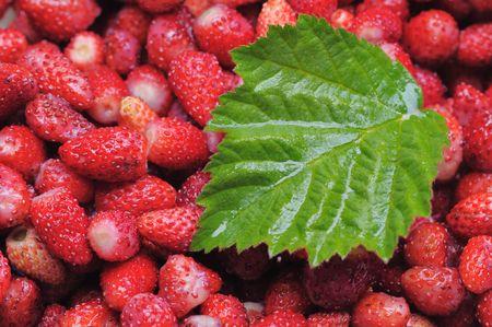 Wild strawberries. Narrow depth of field. Stock Photo - 3361069