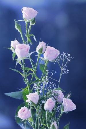 ピンクのバラの花束。クローズ アップ。フィールドの狭い深さ。