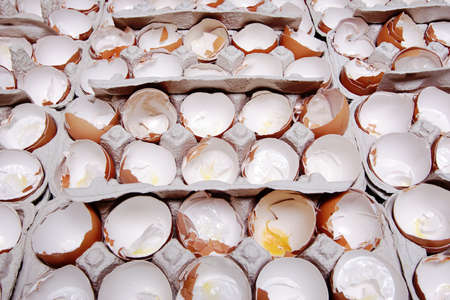 Used and empty egg-shells in the carton packing  photo