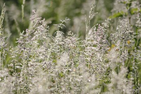 Miscellaneous herbs on the meadow. Hot summer day. photo