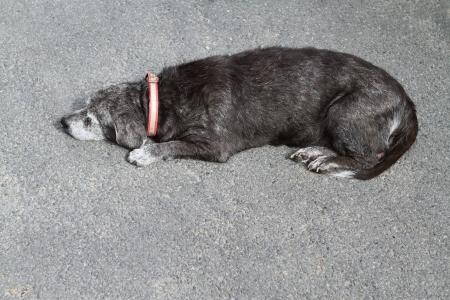 Dog sleeping on the asphalt road in the Bangkok  Thailand  photo