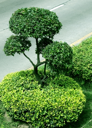 Green tree on the street of the Bangkok  Thailand  photo