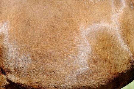 hoofed animal: Caballo en el pasto Close-up