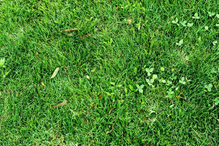 veiw: Green grass texture. Veiw from top. Stock Photo