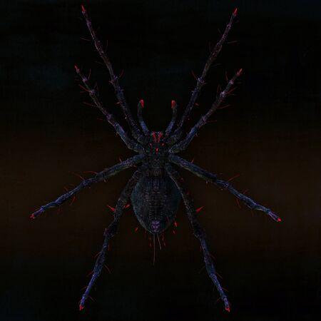 poisonous: Dangerous and poisonous spider. Illustration.