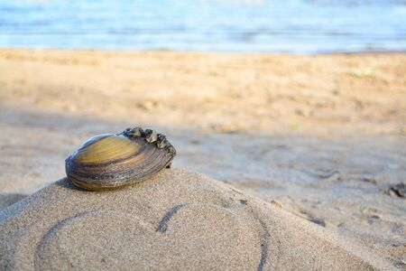 barnacles: sink on sand with love Stock Photo